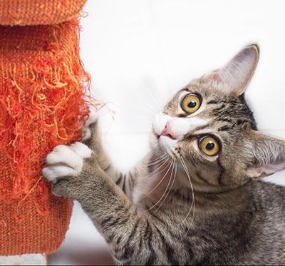 cat on orange scratching post