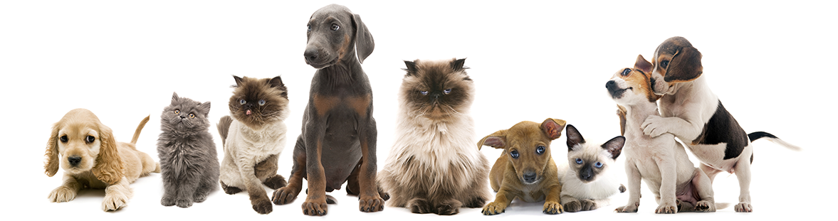 dogs-and-cats-in-a-line