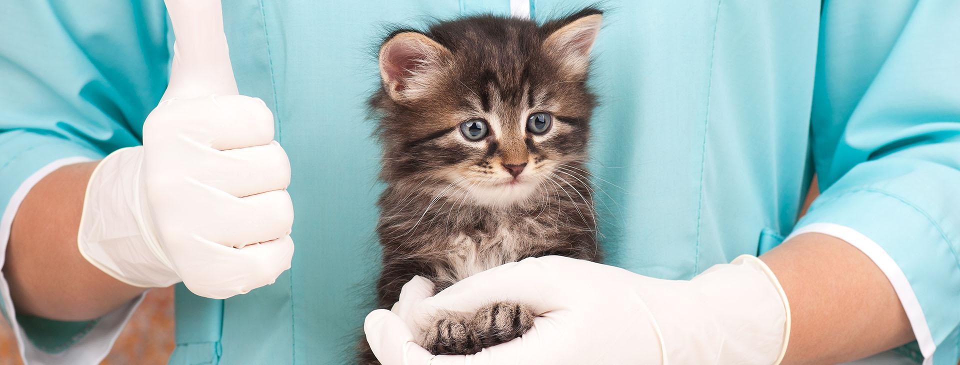 veterinarian holding kitten with thumbs up