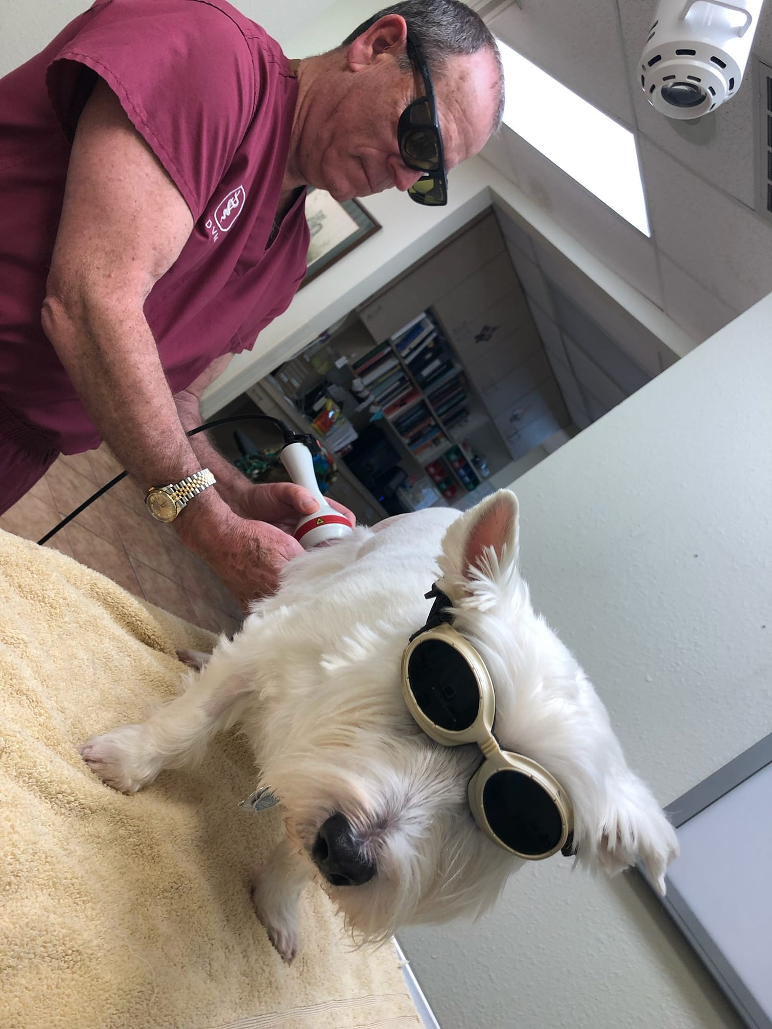 dr-reeves-cold-laser-therapy